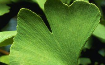 5 plante cu efect antirid. Cum să rămâi mereu tânără