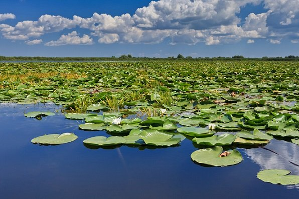 a beautiful lake in Danube Delta, Romania