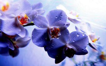 Extractul de orhidee si vitamina E pastreaza culoarea parului vopsit