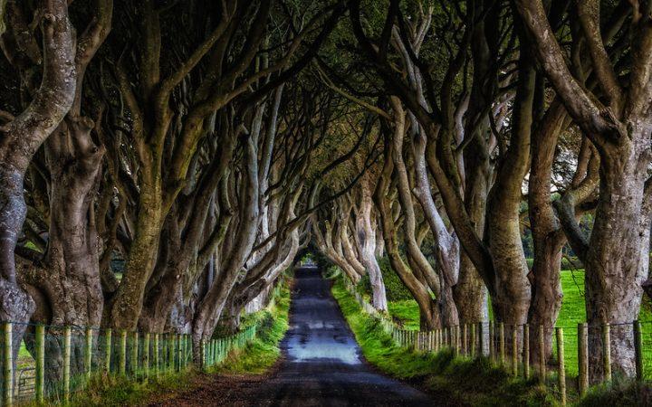 Padurea Dark Hedges, locul bantuit de Doamna Gri