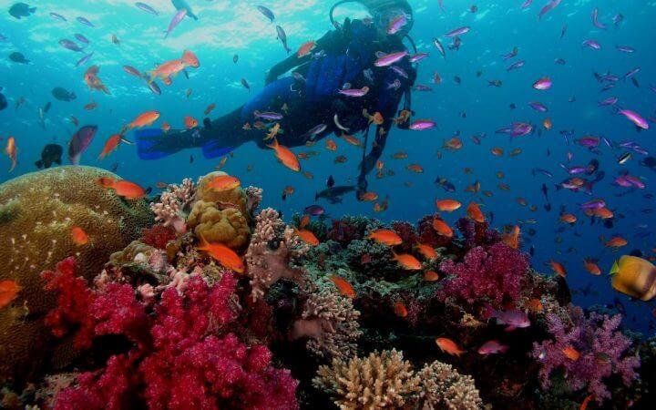 Marea Rosie, Egipt