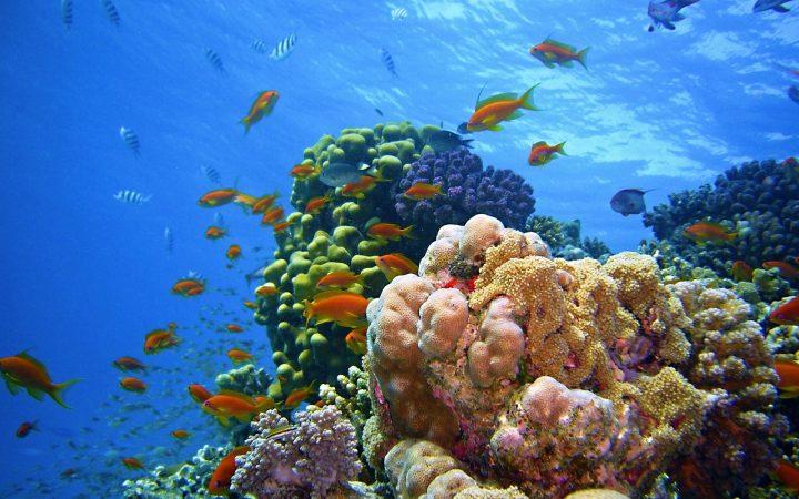 Hurghada si Sharm el Sheikh