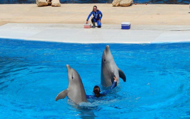 Înot cu delfinii în Mediterraneo Marine Park