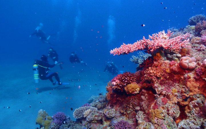 Sesiuni nesfârșite de scufundări în Marea Roșie