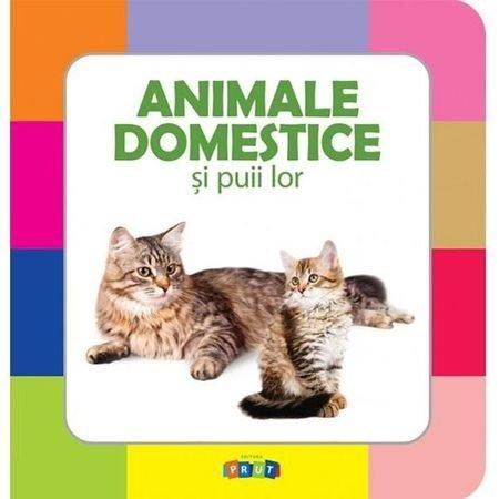 animalele domestice si puii lor