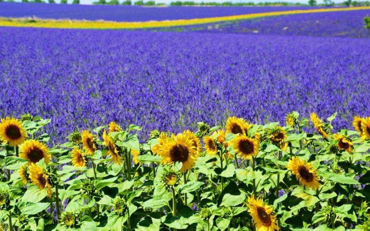 Provence, Franța