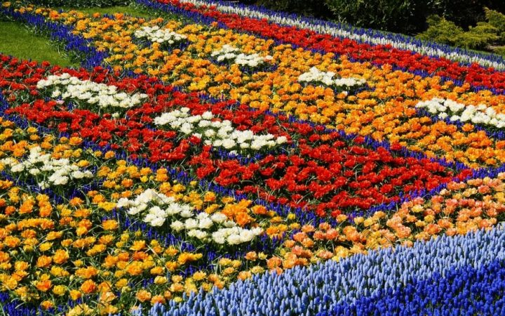 Flori, fete sau băieți. Regiuni înmiresmate și paradisuri florale. Haarlem și Keukenhof, Olanda