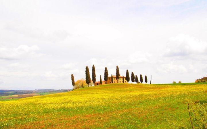 Câmpuri de floarea soarelui, Italia