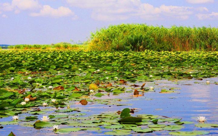 Lacurile cu nuferi și lotuși, Delta Dunării