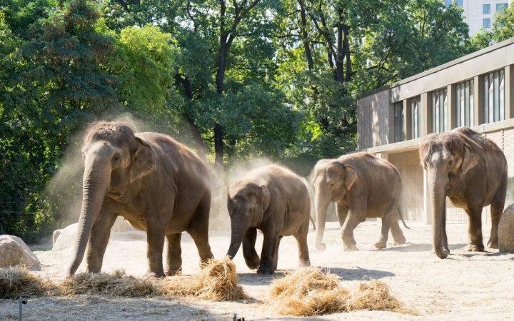 Grădina Zoologică din Berlin