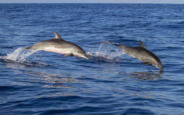 Terapie cu delfini. Madeira
