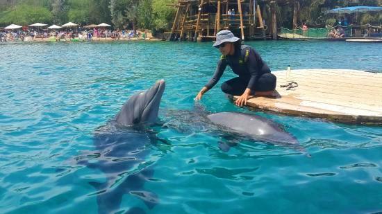 Terapie cu delfini. Israel