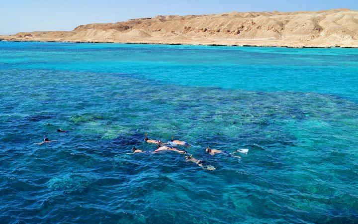 Terapie cu delfini. Egipt