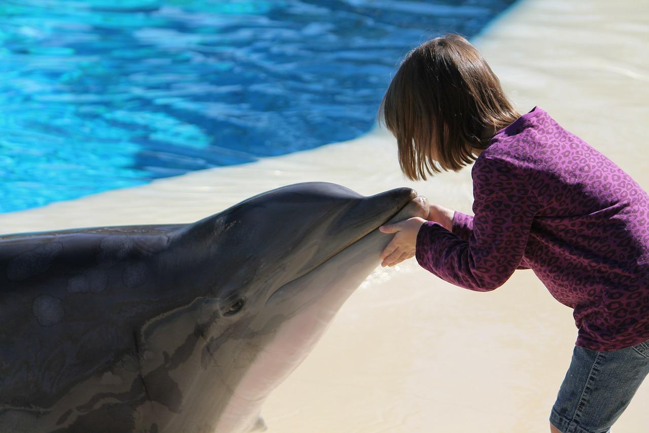 Terapie cu delfini în vacanță. Locuri unde poți înota cu inteligentele mamifere marine