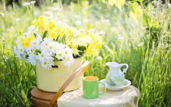Ceaiuri pentru fertilitate