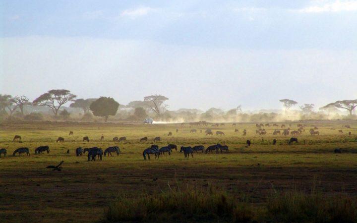 10 călătorii de legendă. Safari în Kenya – experimentează The Big Five!