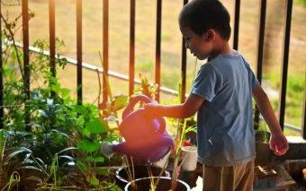 Este important să știi care sunt cele mai periculoase plante pentru copil și să scapi de ele cât mai degrabă.