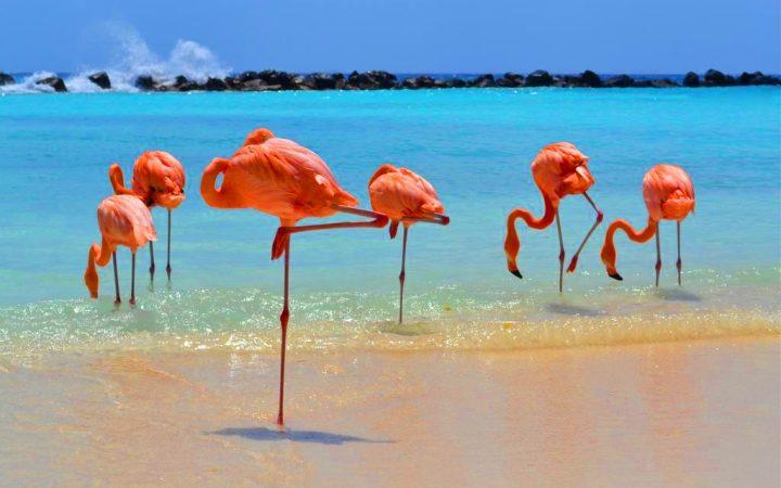 Decembrie exotic. La plajă alături de păsările flamingo în Aruba