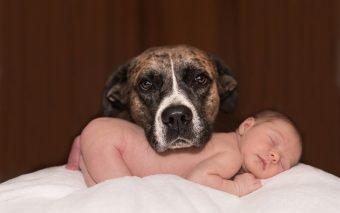 Relația dintre copii și animalele de companie este, fără îndoială, una de prietenie.