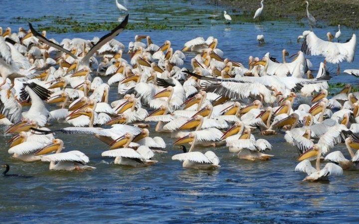 Fă o sesiune de birdwatching– Delta Dunării