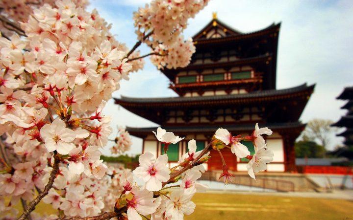 Aprilie. Japonia cireșilor în floare