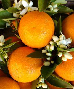 Beneficiile portocalei. 11 utilizări și beneficii ale portocalei