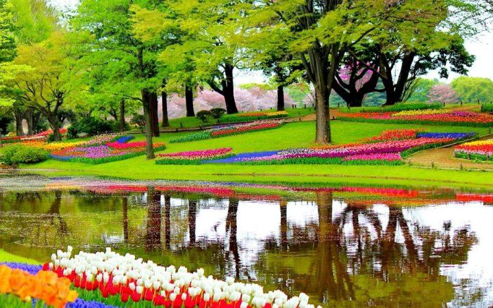 Mii și milioane de flori în  Keukenhof - cea mai mare grădină de primăvară