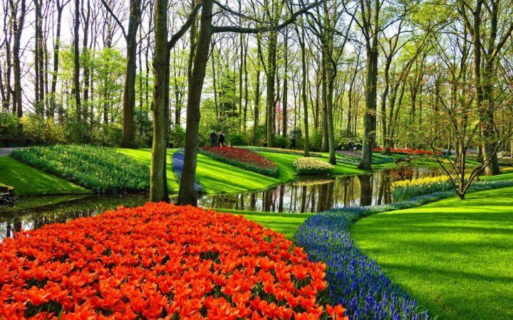 Mărțisor de primăvară în Amsterdam