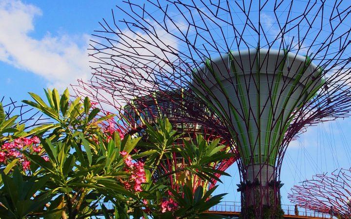 Cele mai frumoase grădini botanice din lume: Singapore