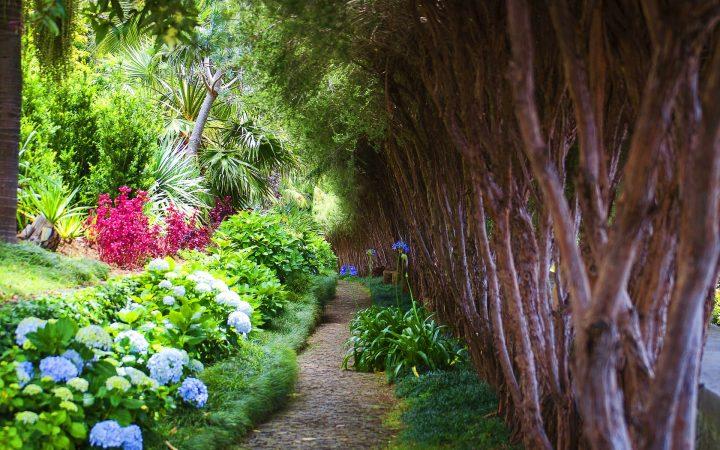 Cele mai frumoase grădini botanice din lume aflate la înălțime