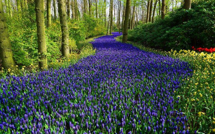 7 milioane de flori cu bulbi și 7 grădini tematice!