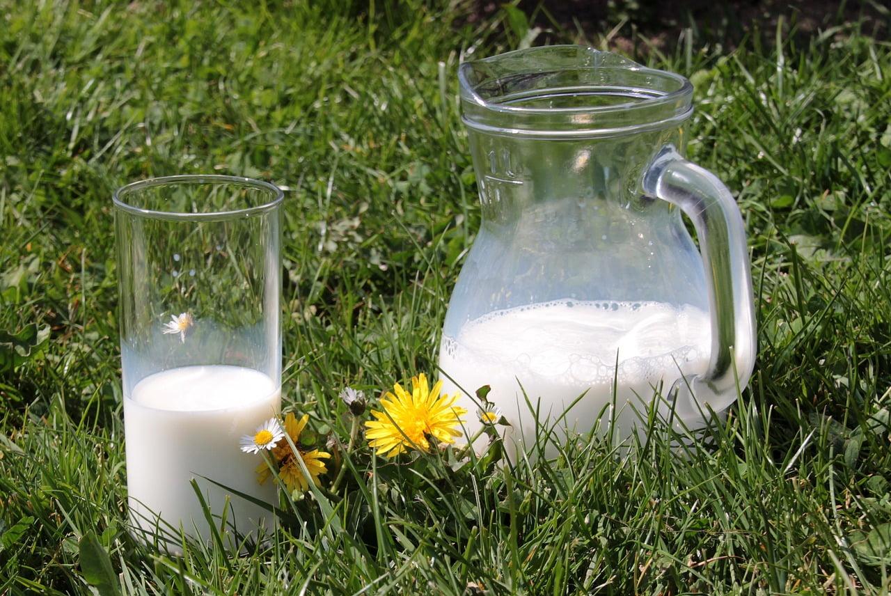 Beneficiile laptelui de măgăriță. De ce să bei lapte de măgăriță