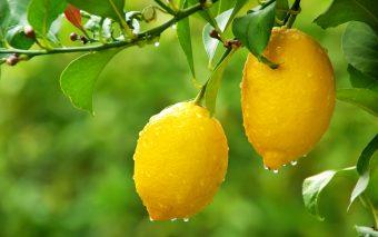 Întrebuințări ale lămâilor. Cum te poți bucura de aroma și beneficiile lămâilor?