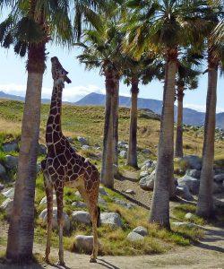 Grădini zoologice în Europa. Ce să vizitezi?