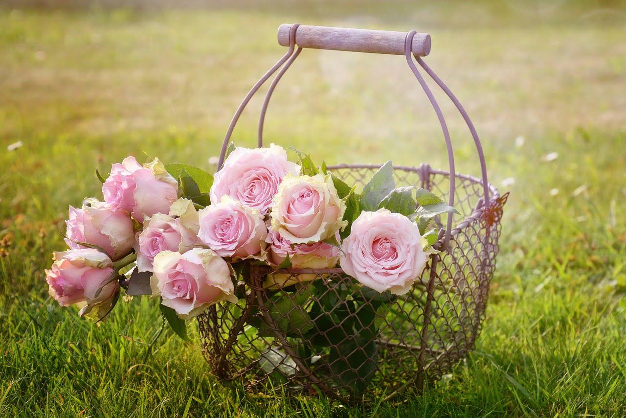 Tratamente naturiste cu trandafiri. Și frumoși și sănătoși