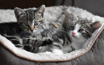 Beneficiile unui animal de companie. Terapia cu animale de companie și beneficiile acesteia