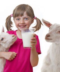 Beneficiul consumului de lapte de capră pentru sănătate
